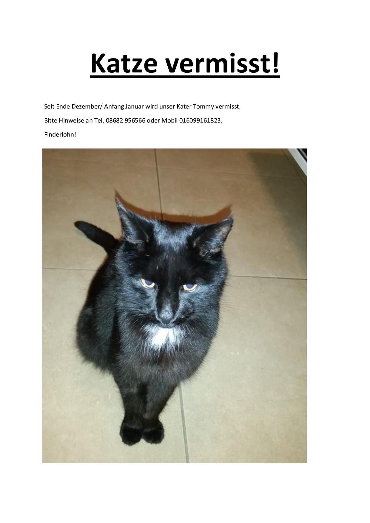 Katze Vermisst 2017 Aktuell Page 001 Tierschutzverein
